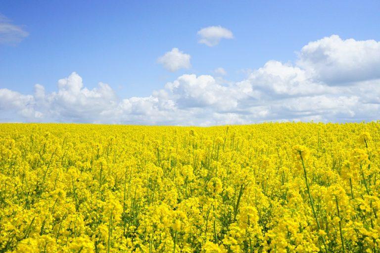 Stosowanie środków uprawy roślin w uprawach